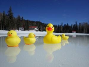 Ducks Stadium