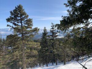 Ridgeview Snowshoe Trail 1