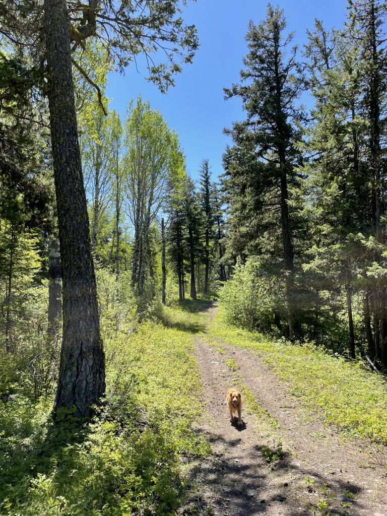Panorama Trail in the Spring