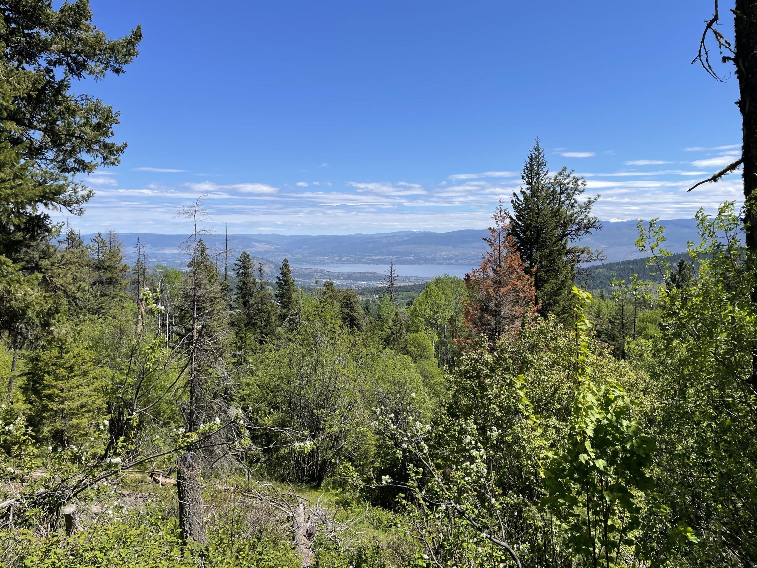 Okanagan Lake from Panorama Trail